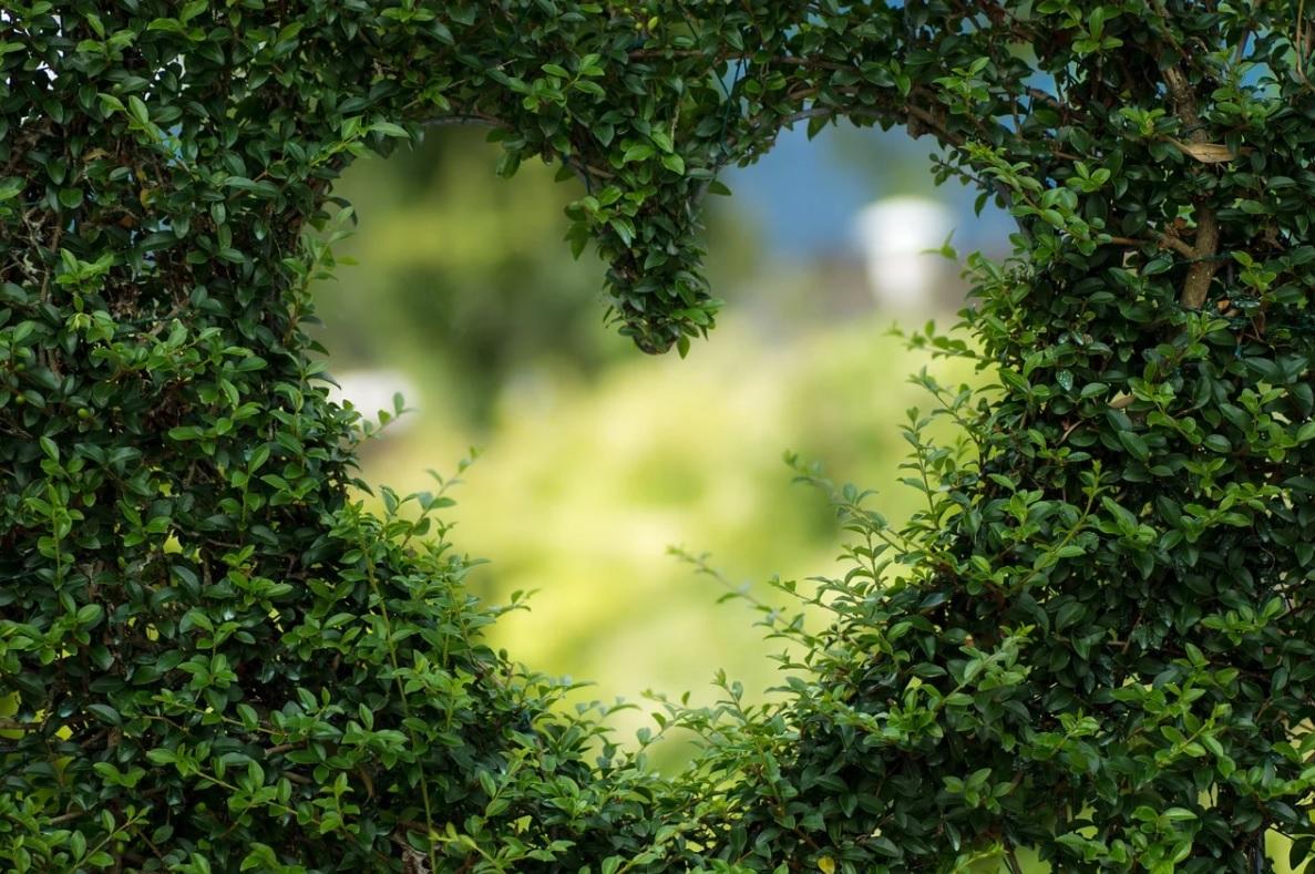 Heart shape in foliage